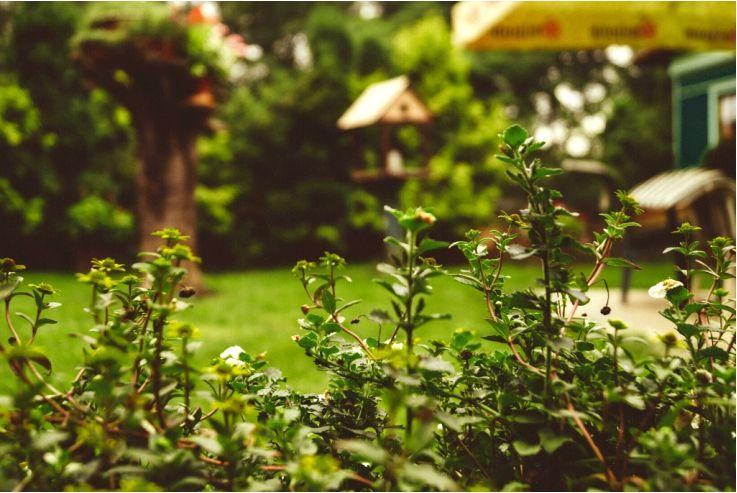 Обустройство сада - идеи и вдохновения для обустройства сада перед домом