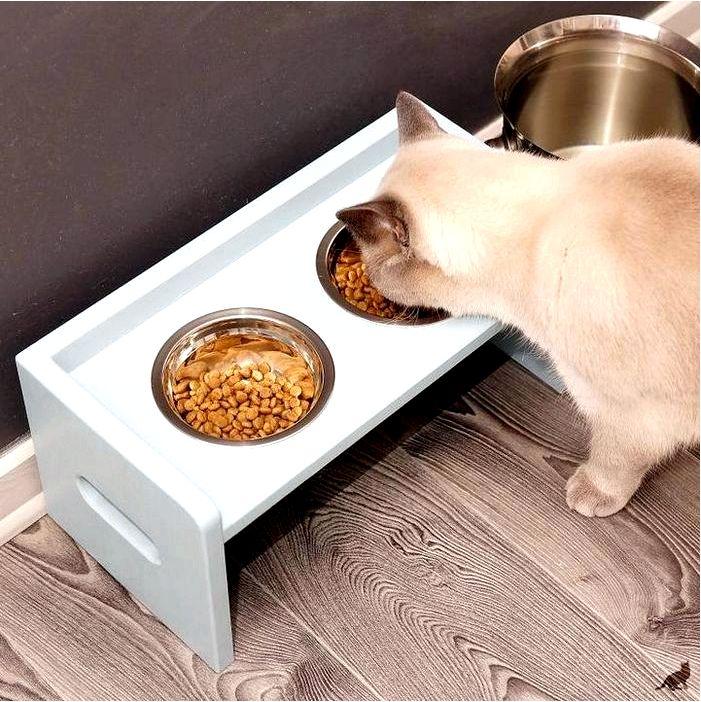 Как выбрать влажный корм и консервы для кошек и котов