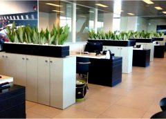 8 преимуществ растительных стен для офисных помещений