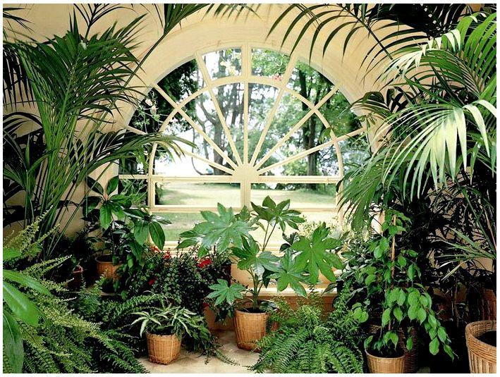 Как выбрать здоровые растения для своего сада. На что обращать внимание?